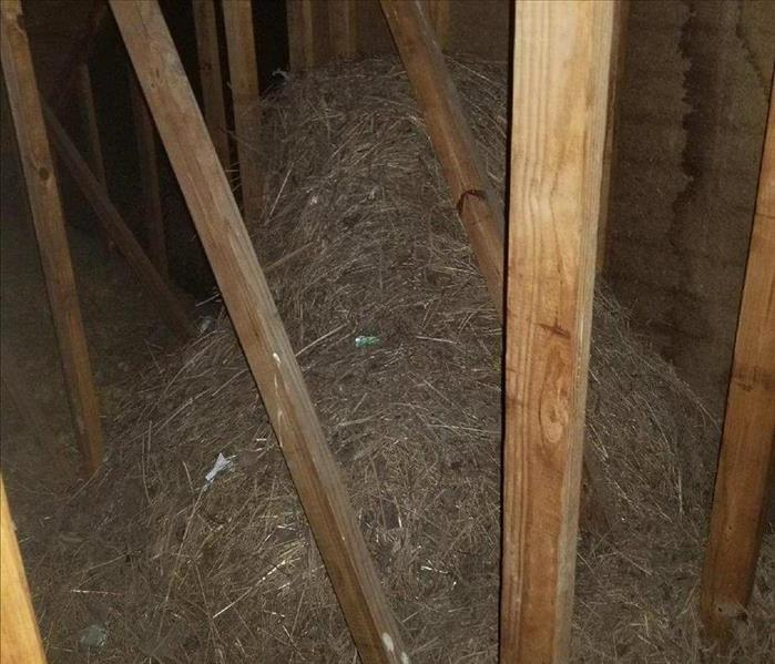 Large birds nest in a customers attic