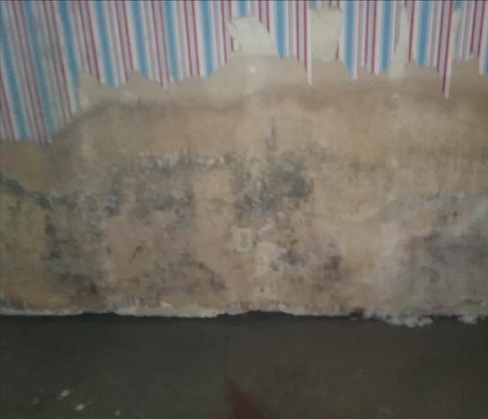 Mold Remediation Let the professionals clean up the mold!